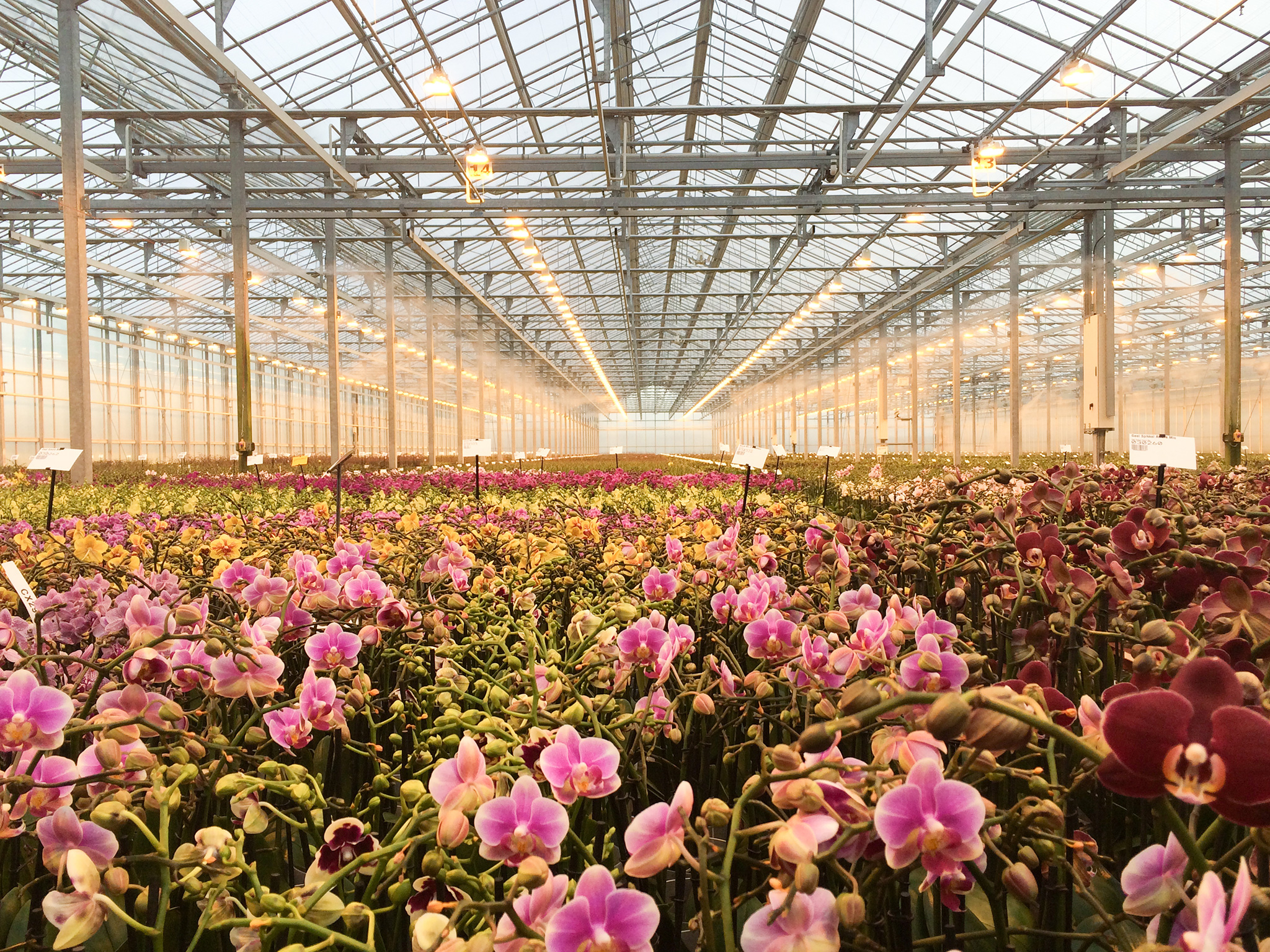 RU Demeter greenhouse