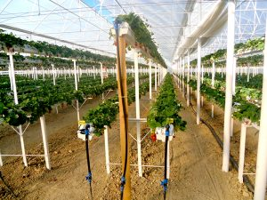 Demeter greenhouse systems